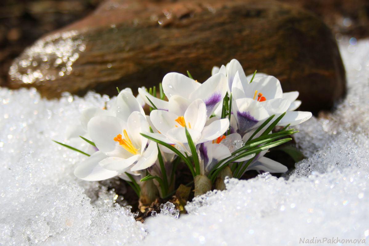 Открытки снег весной, красиво нарисовать открытку