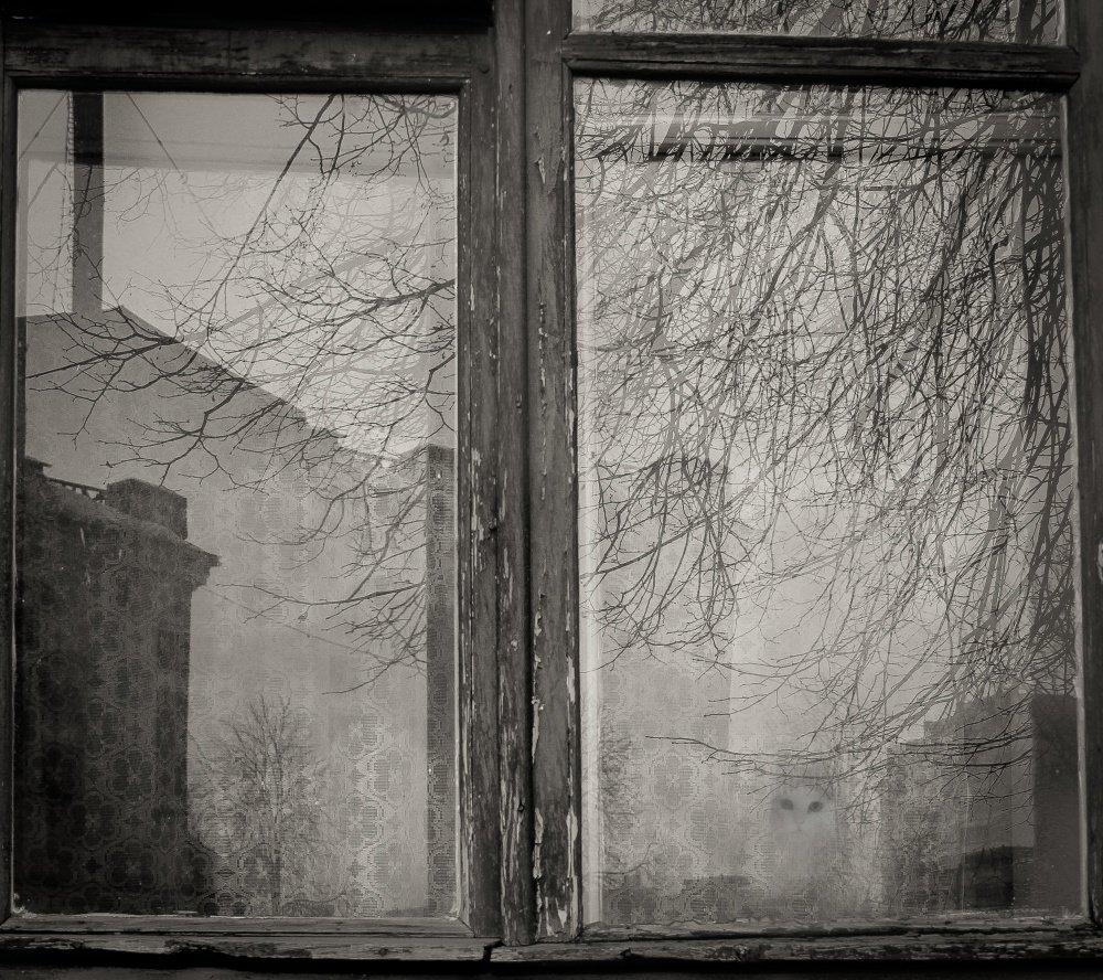 Жизнь за окном картинки