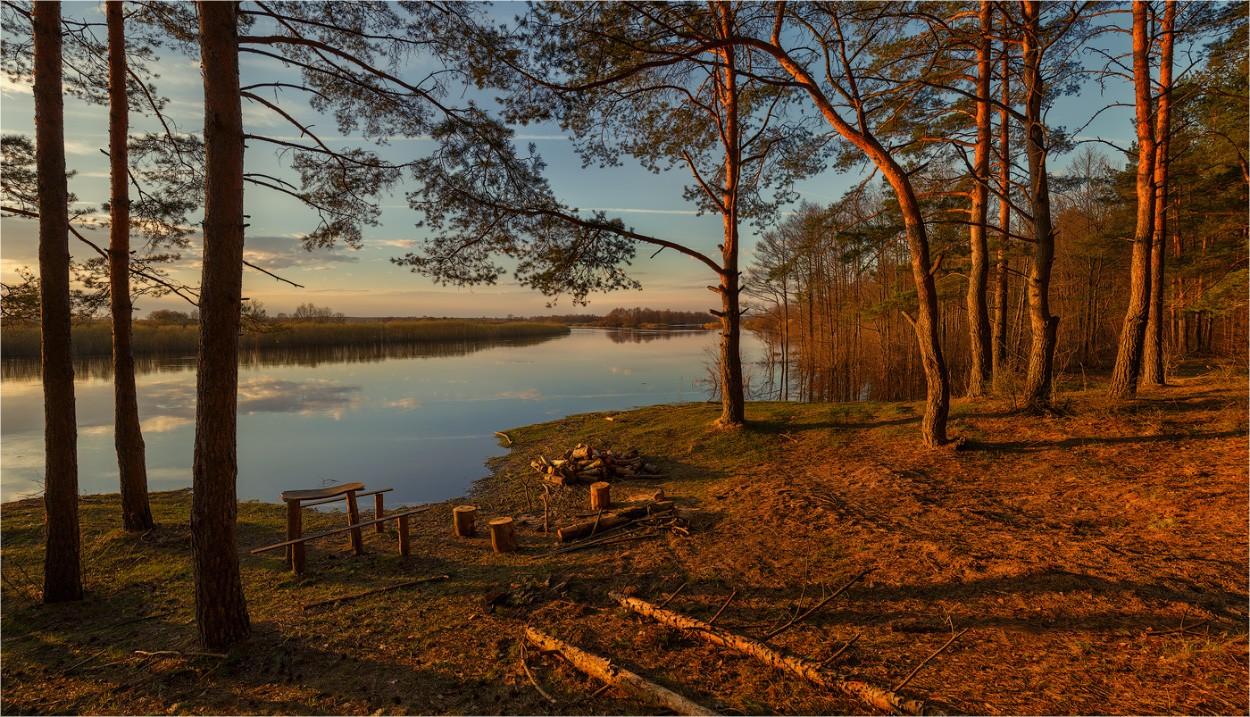 сосны на берегу озера картинки многообещающее