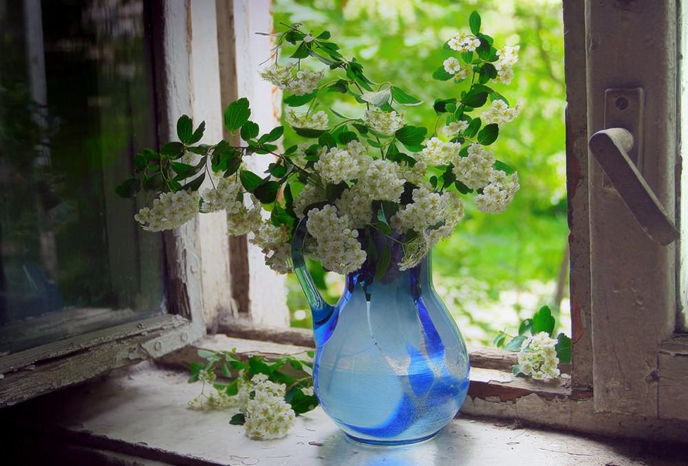 является одним фотонатюрморты цветы на окне пизду только