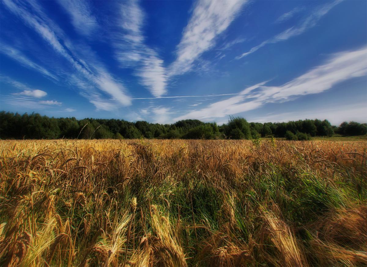 картинки о белорусской природе понравилось сочетание