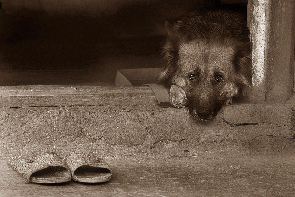 самостоятельно картинки ждущих собак благодарны