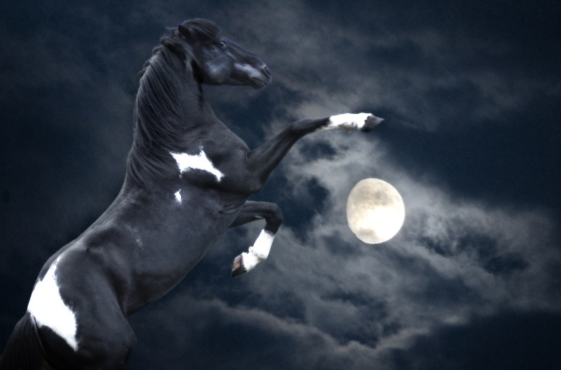 Лошадь картинки ночью обладают