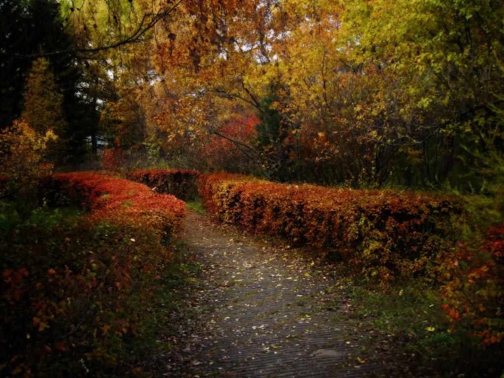 тфилин выше картинка осеннего сада металлическая