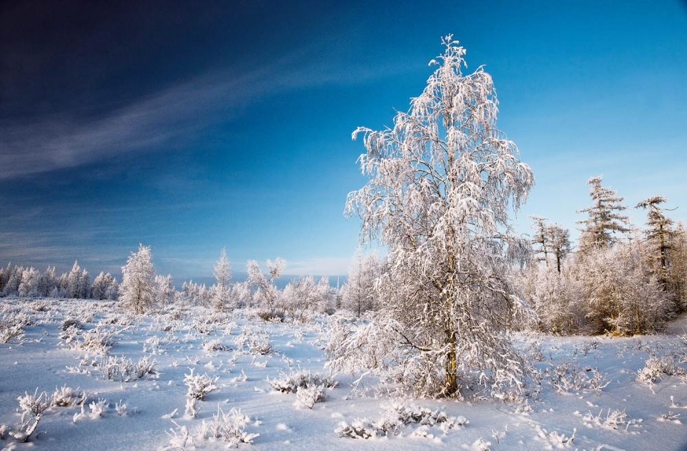 Ручной, картинки природа сибири зима