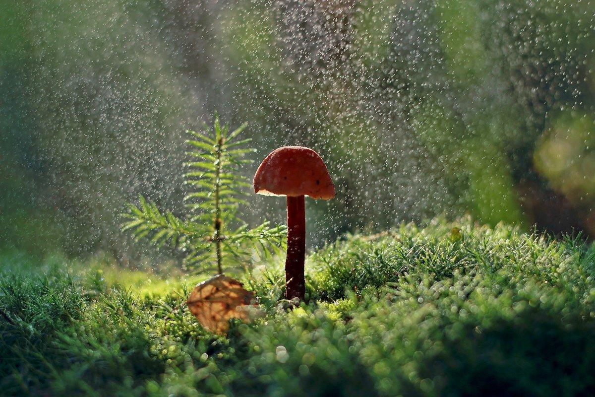 честно картинка солнышко цветок гриб малыша