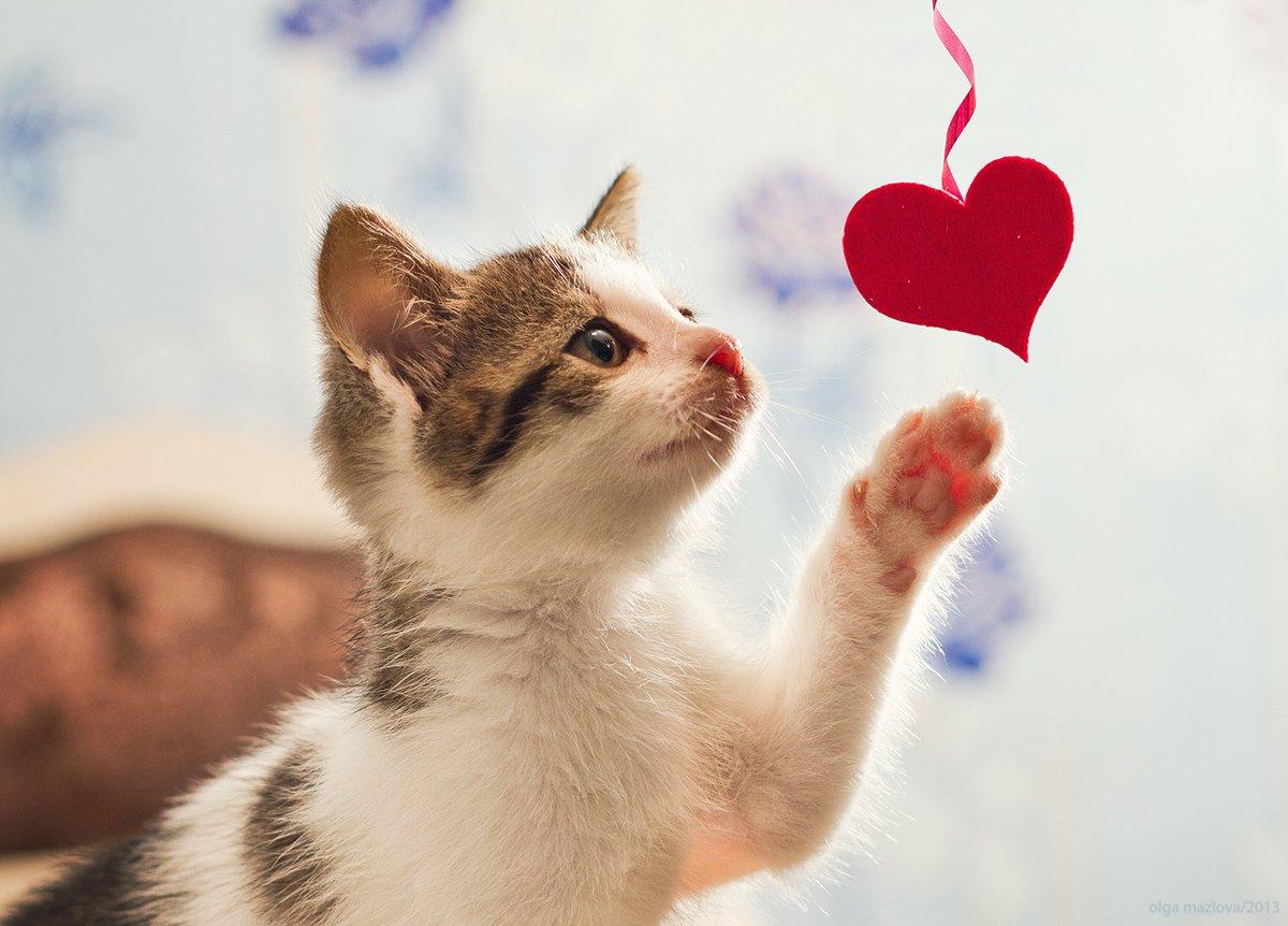 Картинки кошка с сердечком