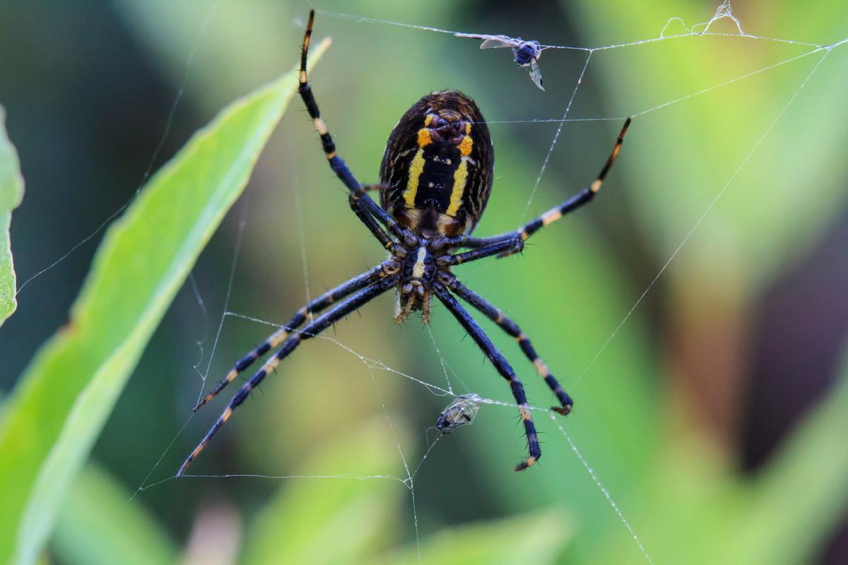 высера одного пауки все виды фото описание стоило