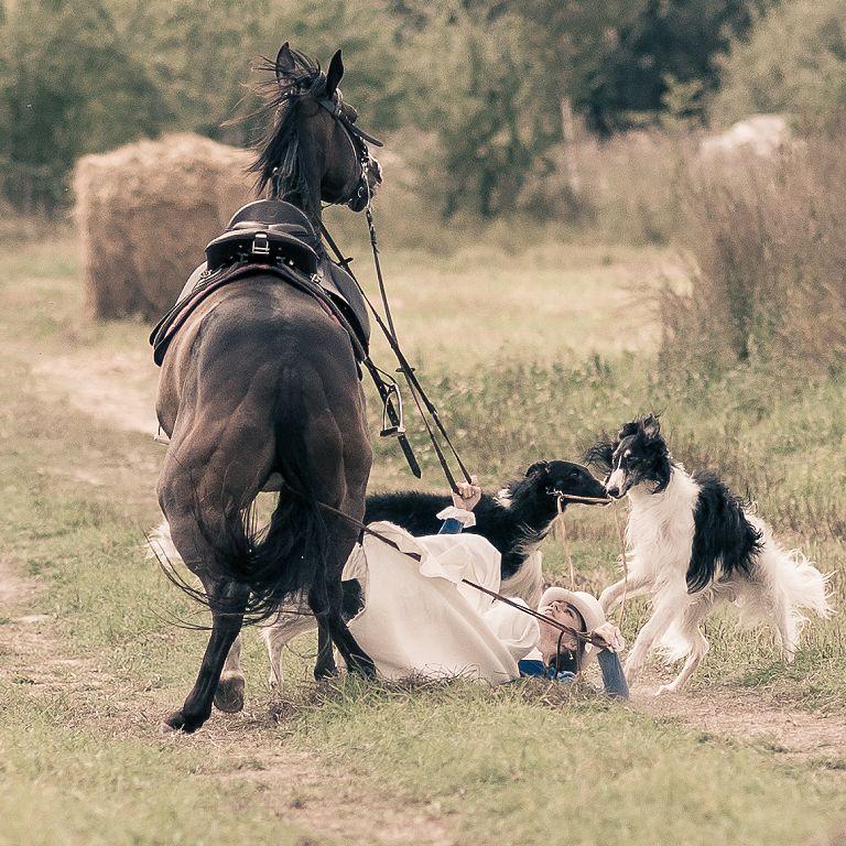 картинки борзая лошадь владимир