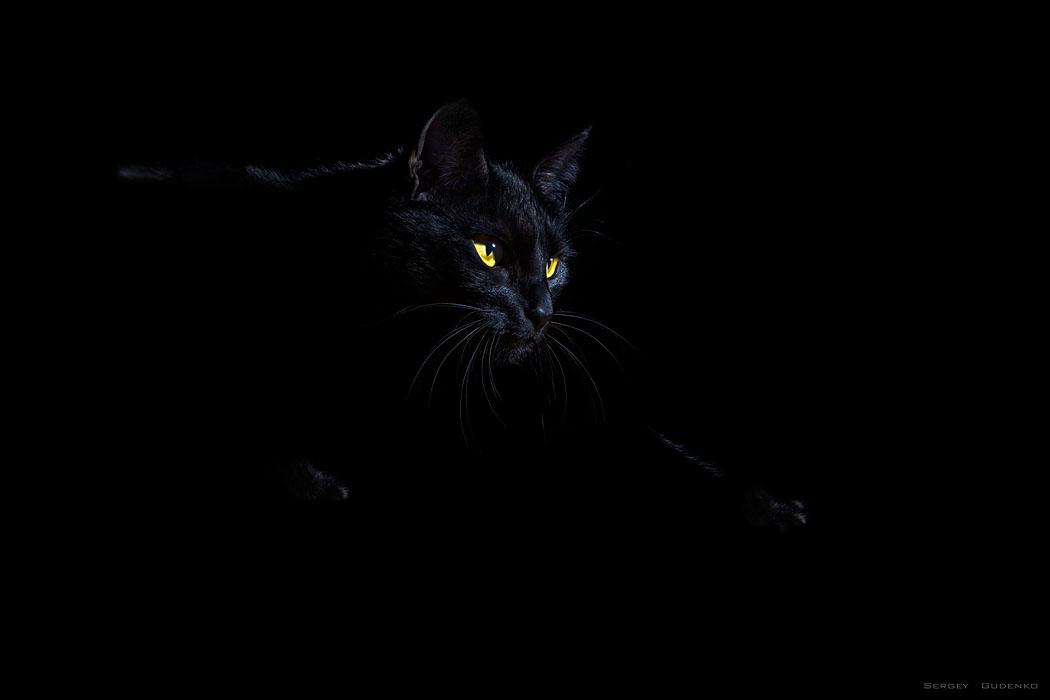 места картинки с черными кошками на черном фоне это