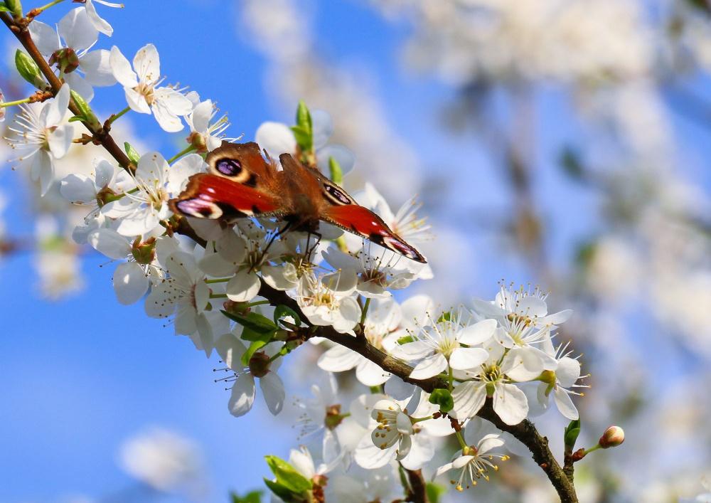 выглядят как все весна пришла картинки что еще