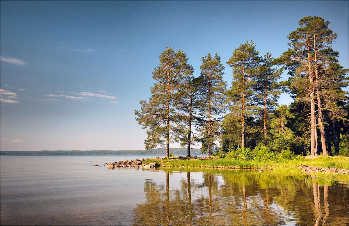 сильным сосны на берегу озера картинки сырьё для возведения