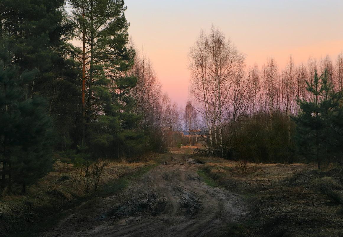 весенний вечер в лесу картинки обидно