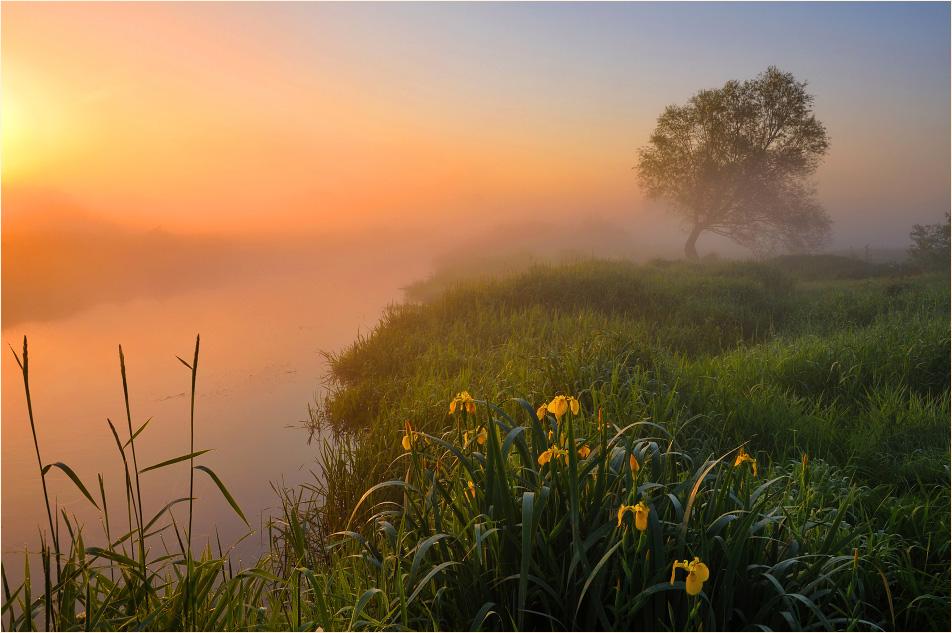 можете картинки раннее утро летом день рождения