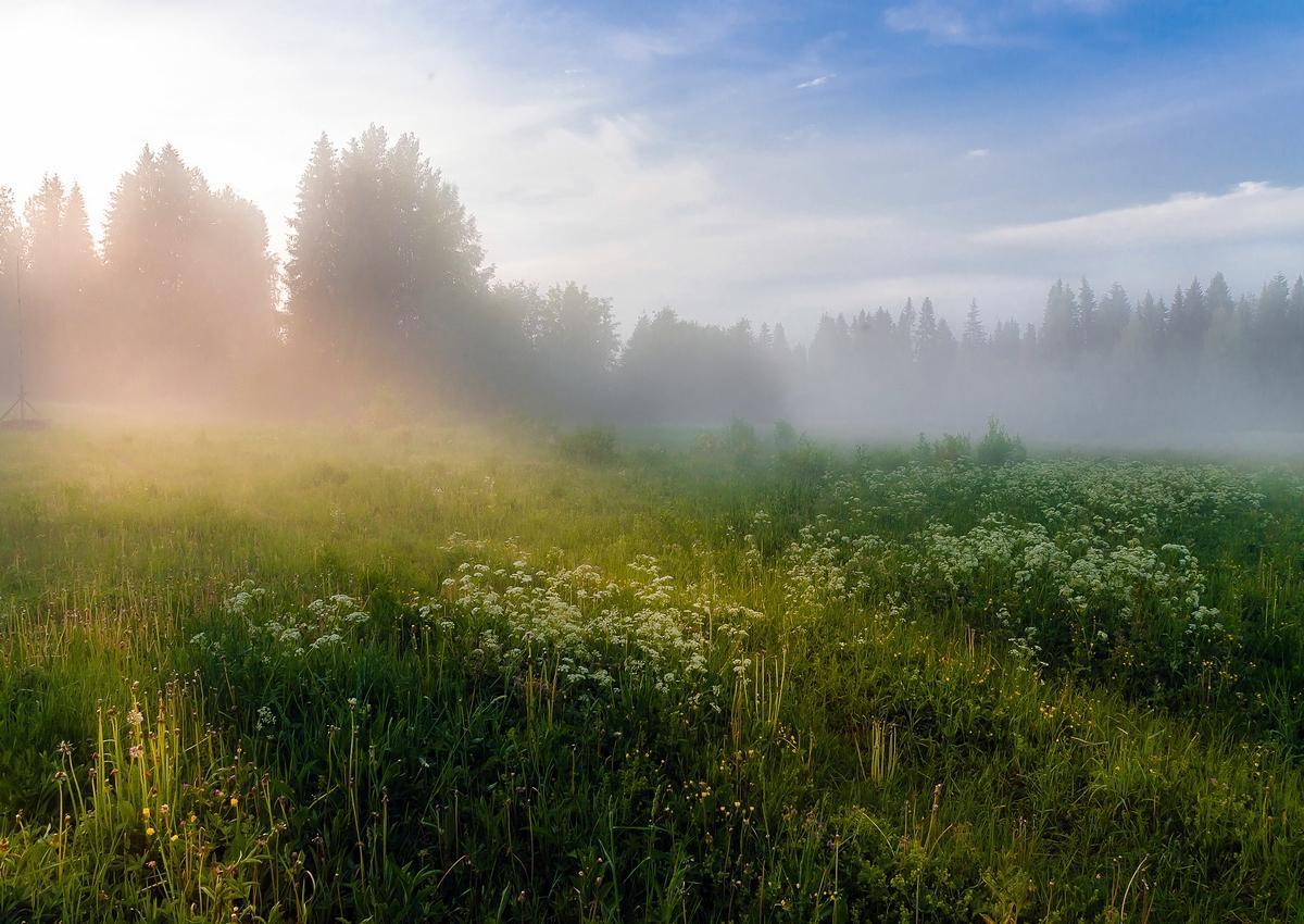 туман летом фото эскиз тату солнце