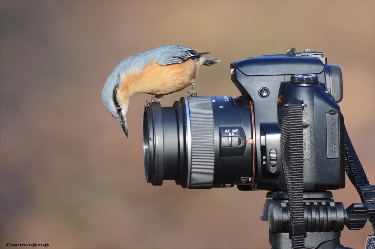 Новые среднеформатные зеркальные фотокамеры