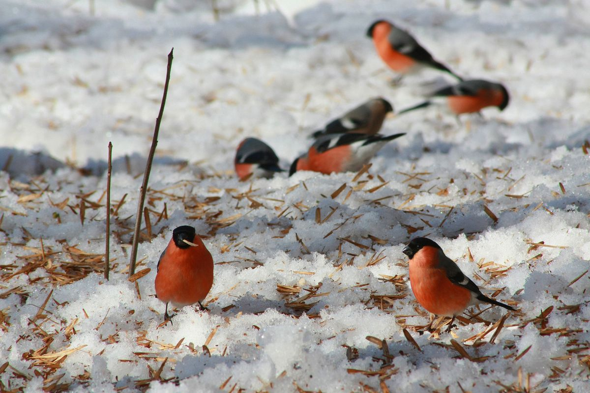 Фото птиц зимой картинки