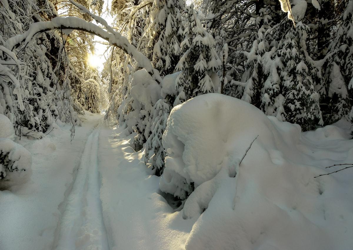 Зимняя прогулка по лесу картинки
