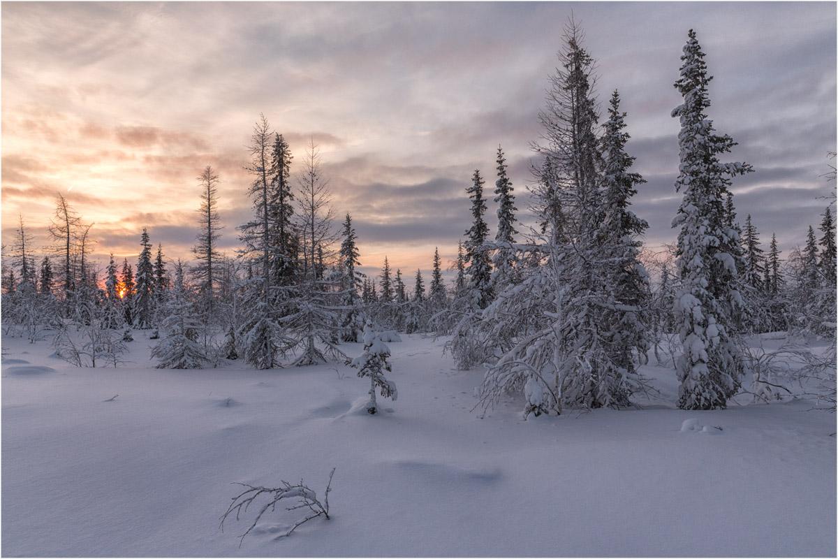 шатен картинки к суровой зиме тундры собрали