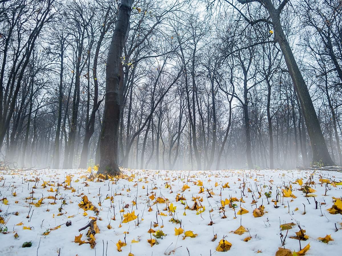 Картинки по времени года зима