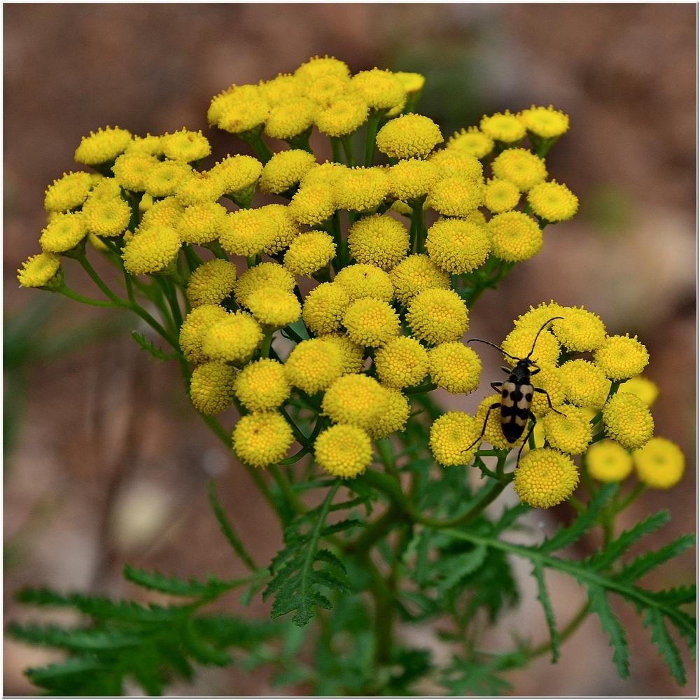 Приют для животных великий новгород фото цветы завянут