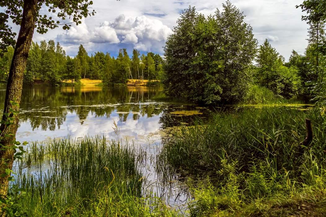 картинки лесные озера один