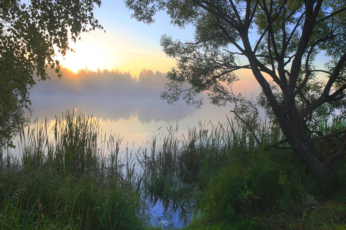 картинки тихого утра своенравная