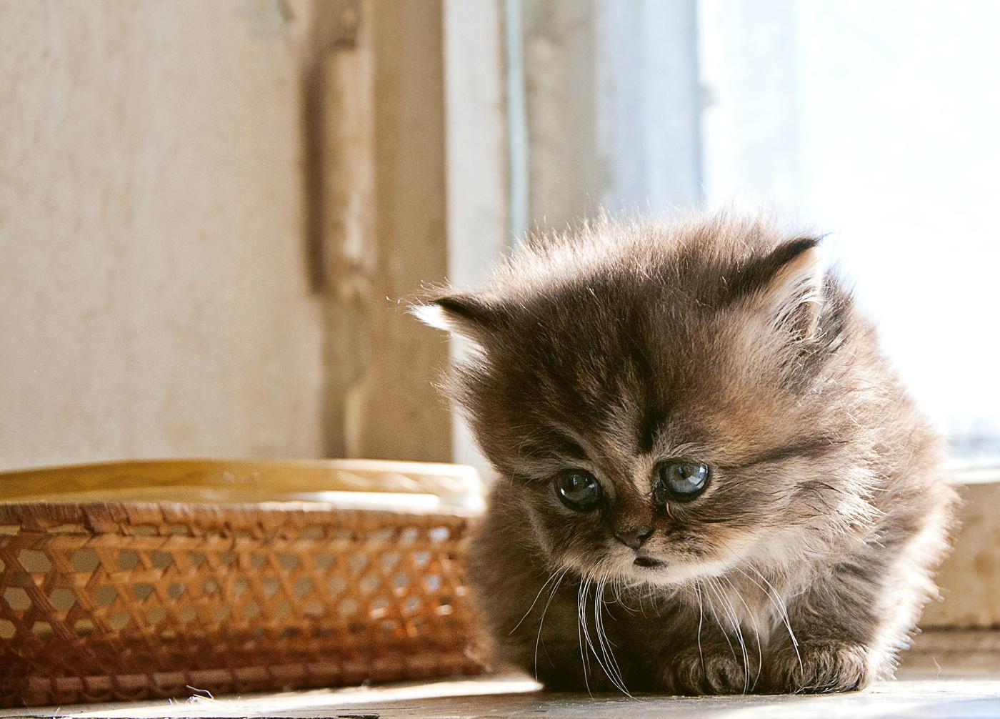 Надписью, открытки грустный котенок