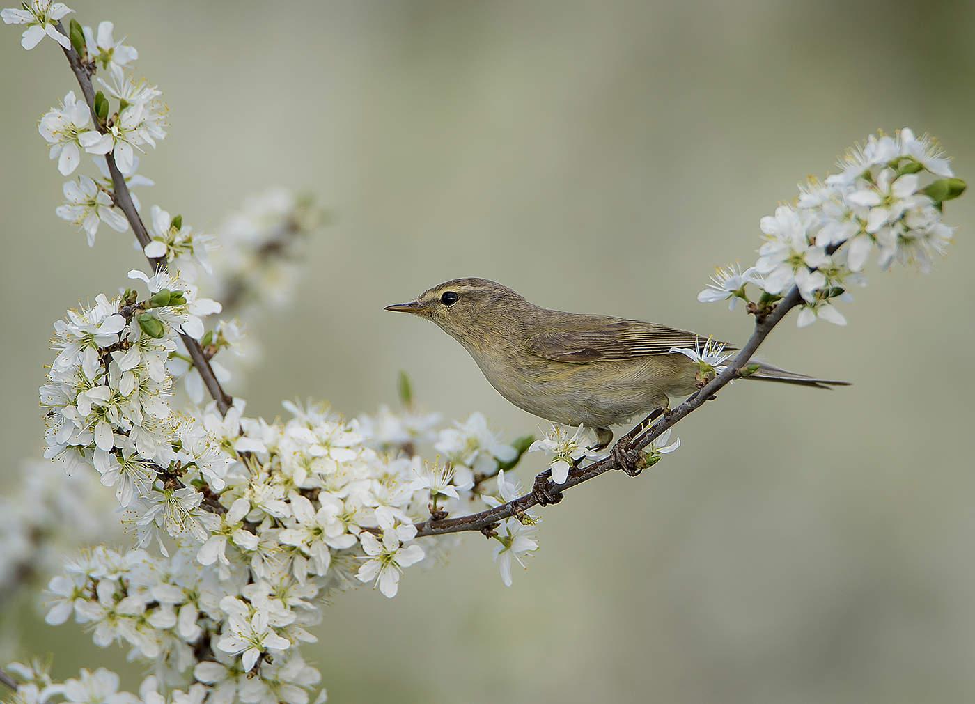 любом картинки птицы в весеннем лесу цементных кругах