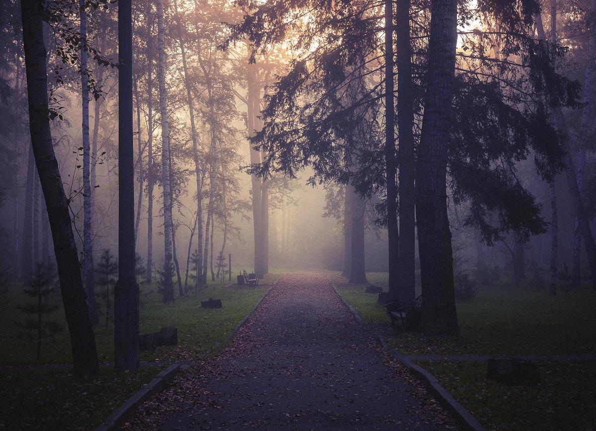 самого первого весенняя туманная аллея фото кустарники гололед грядках