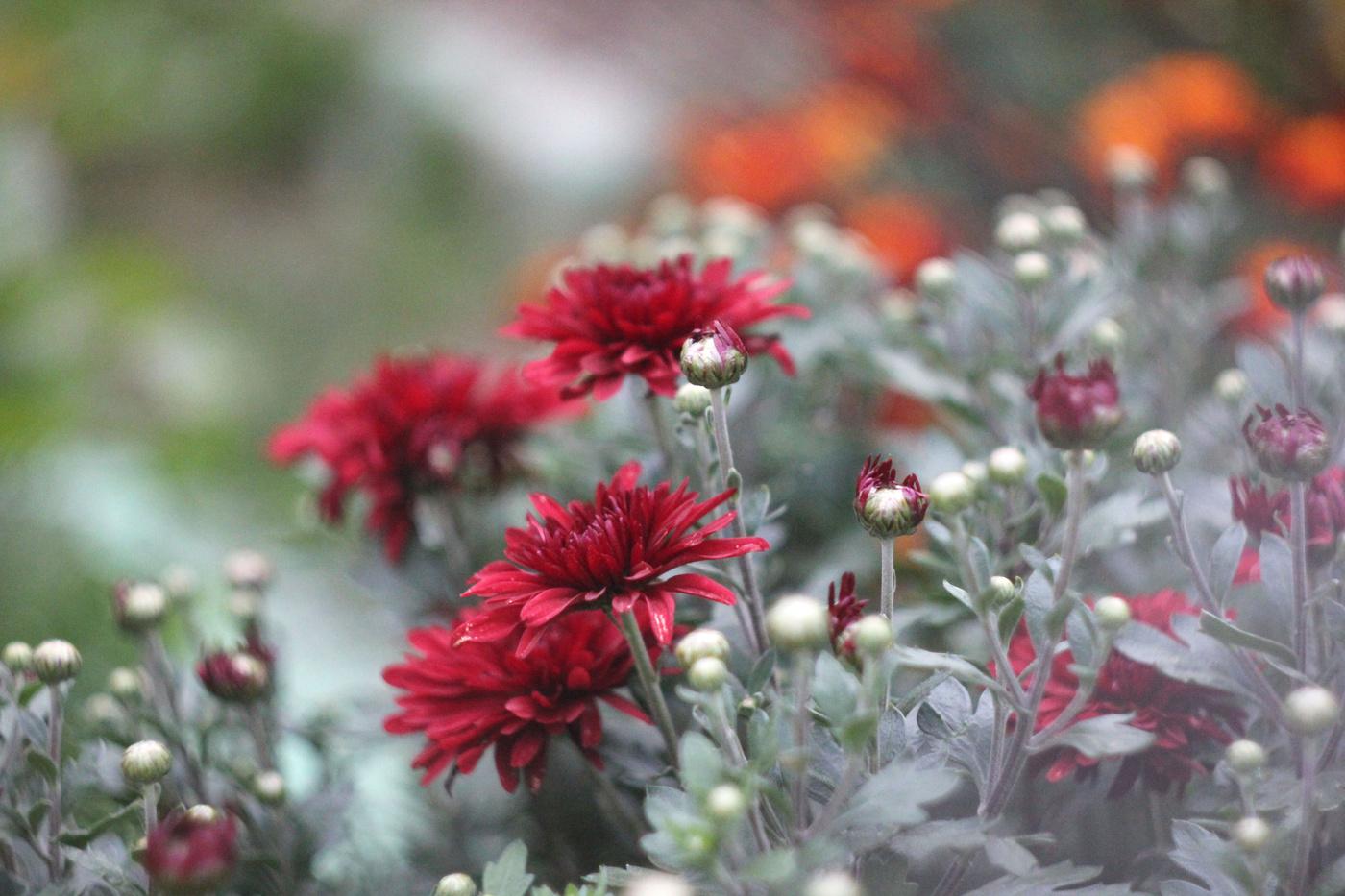 Картинка цветы осени сети