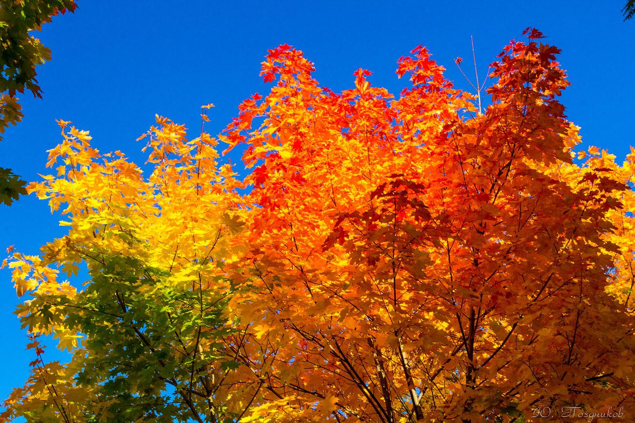 все картинки золотая осень