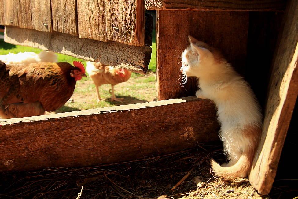 Домашние животные в деревне фото