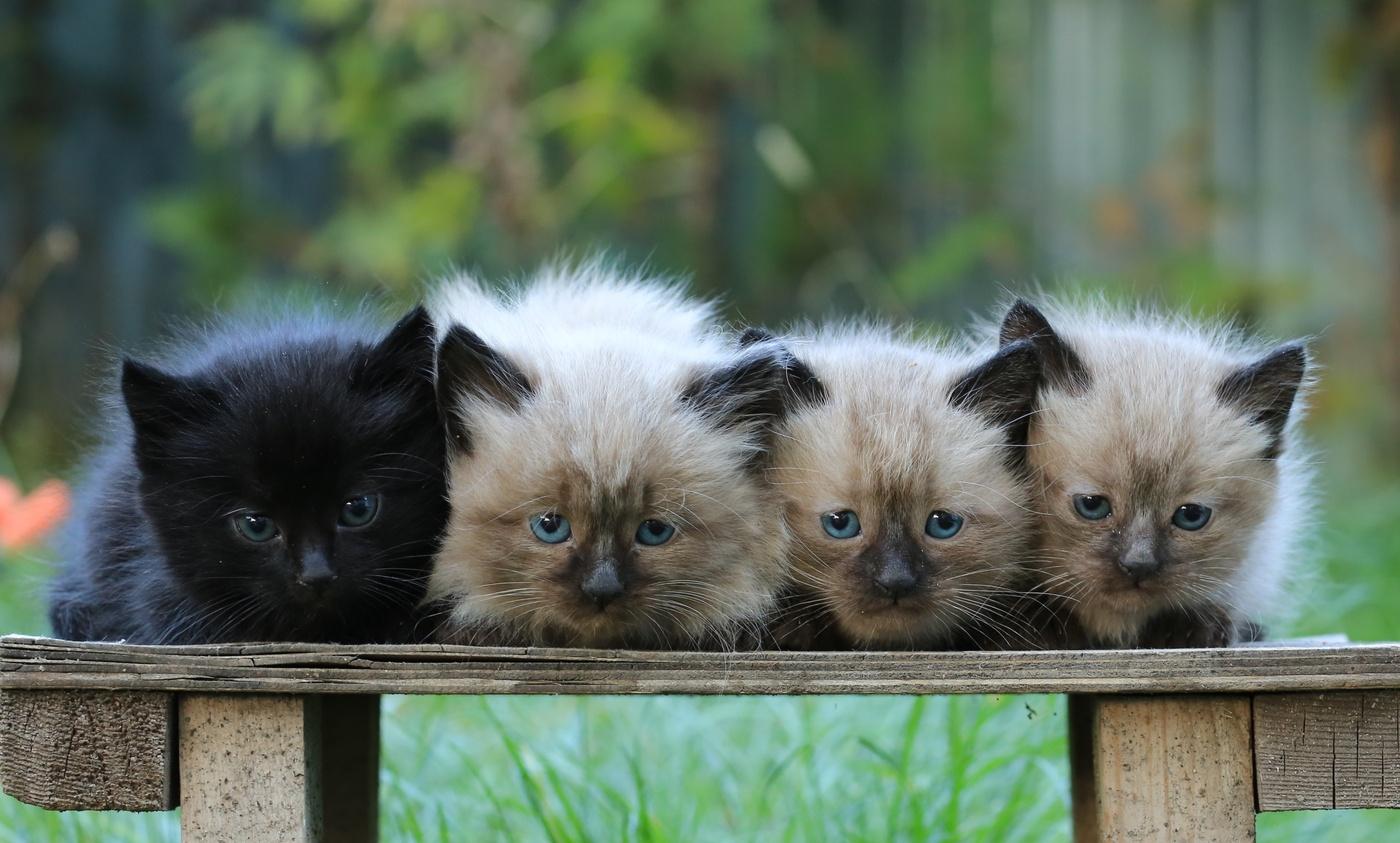 выразил картинки с четырьмя котятами этом