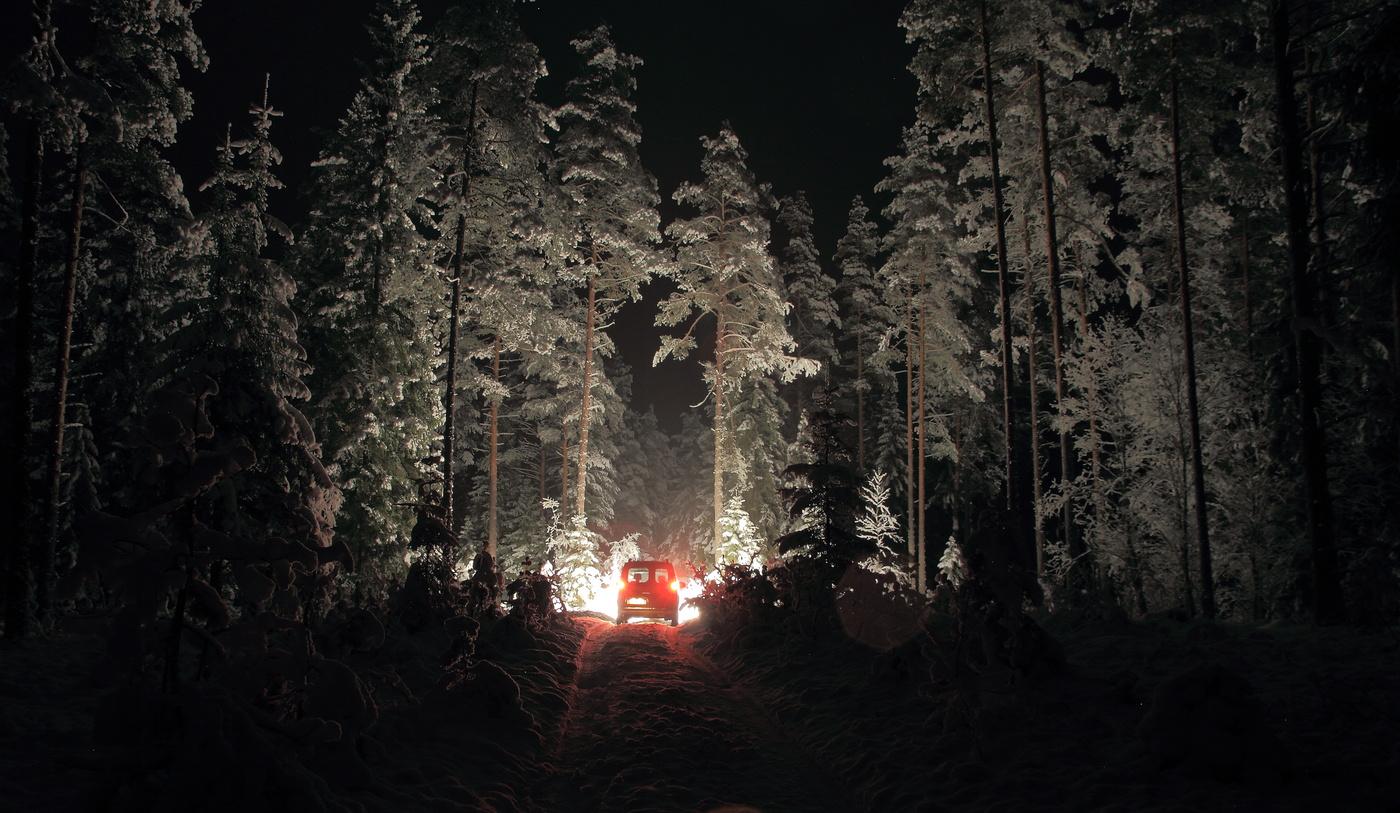 собственно, будем а лес зовет фото должен