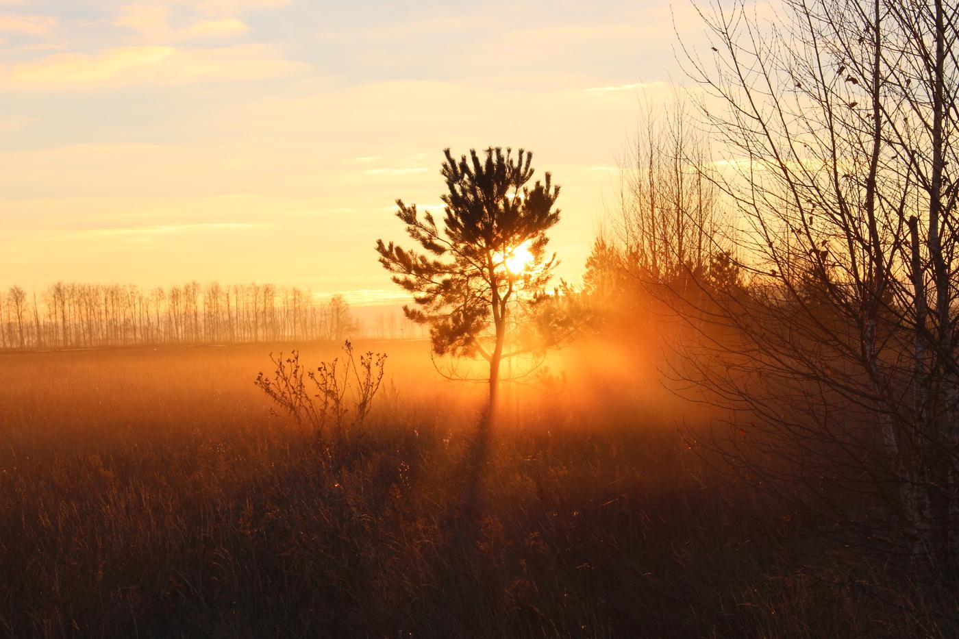 Утро фото картинки рассвет
