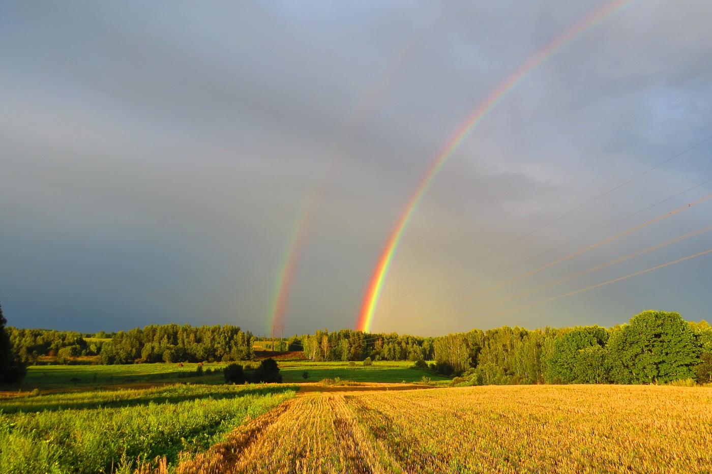 Фото радуги, собак днем