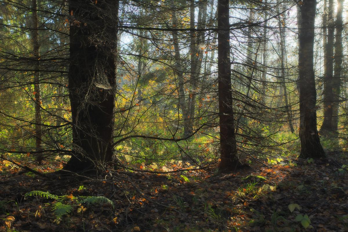 Лесные дебри картинки