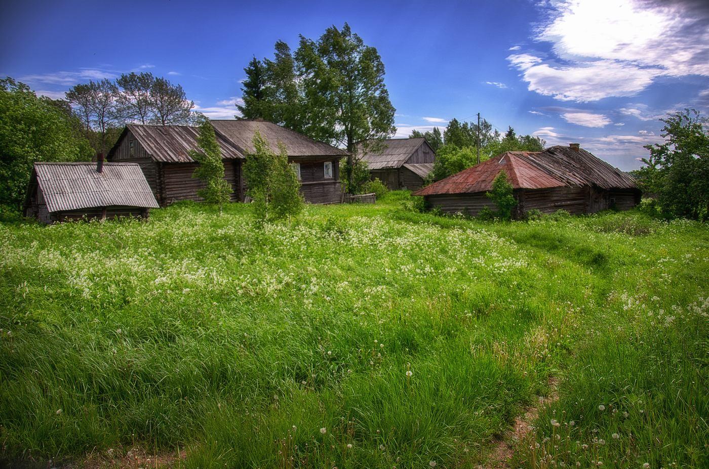 Фото деревня летом — img 14