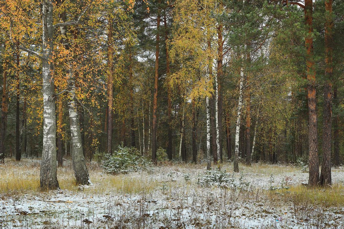 Ноябрь в башкирии фото леса
