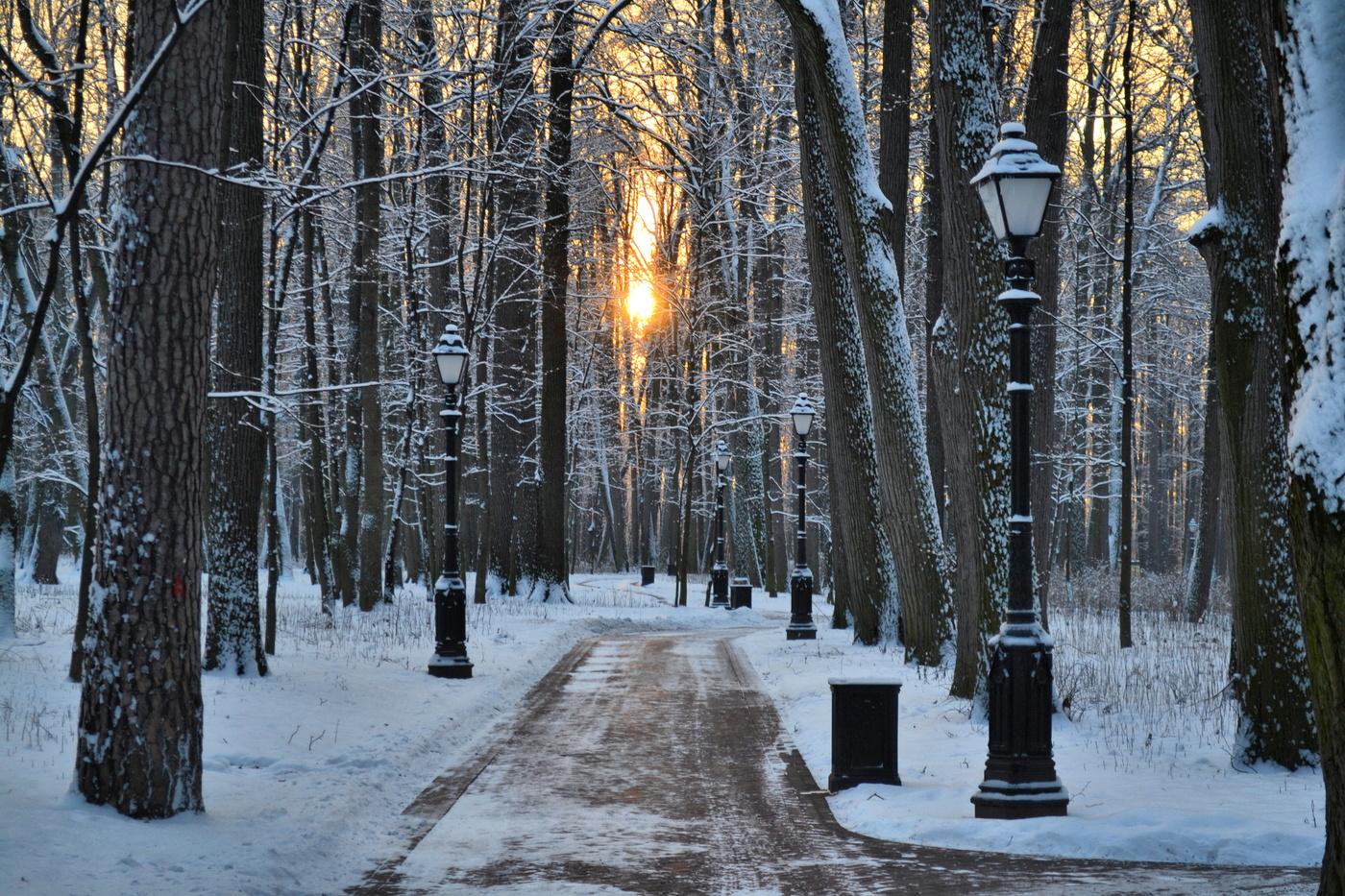 зимний парк фотографии можно встретить только