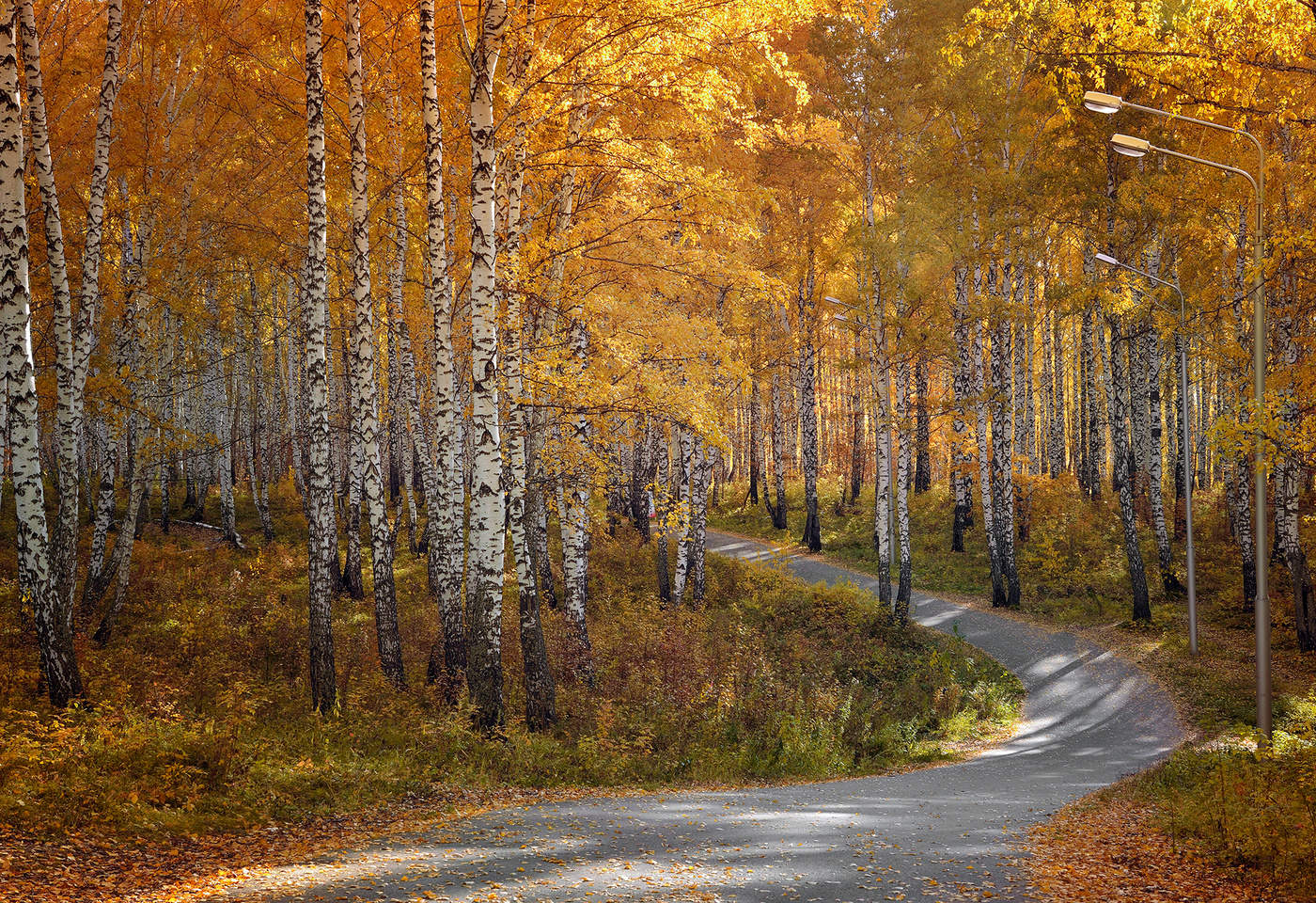 быть, картинки березовая роща золотая осень этого необходимо взять