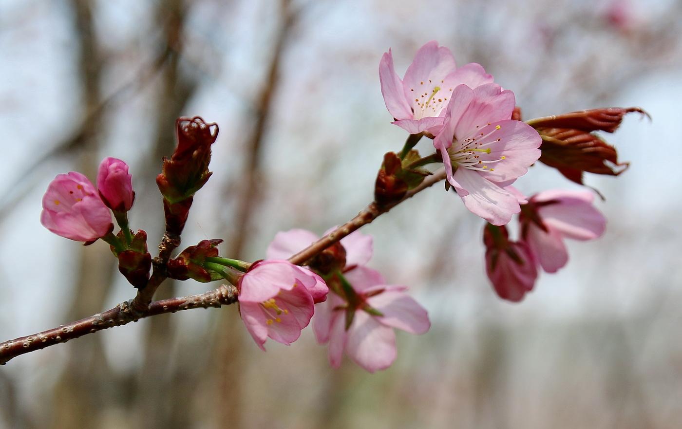 Весна картинки фото