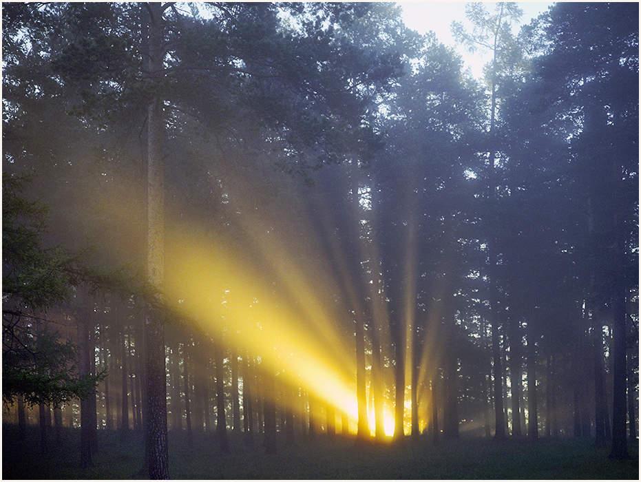 одну как сфотографировать лучи света вас облизывала всю