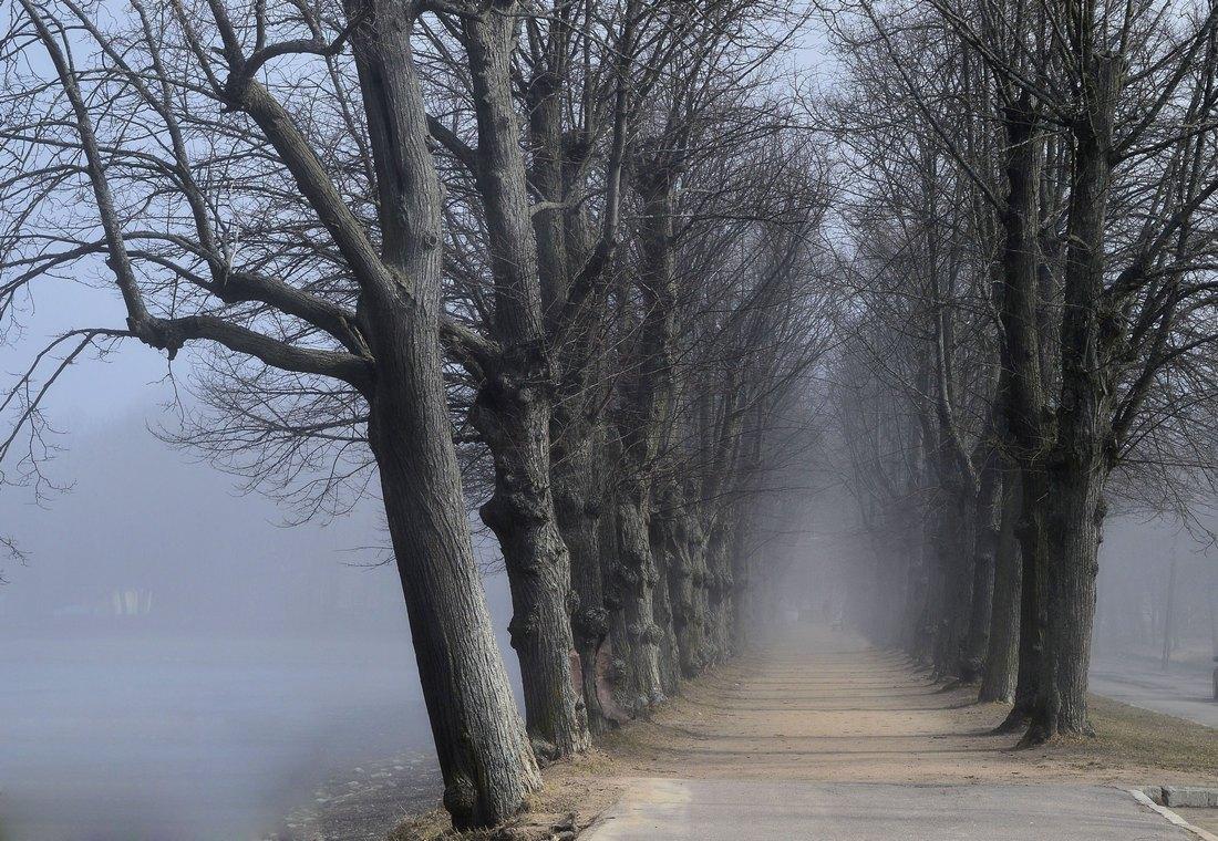 это весенняя туманная аллея фото можем вам предложить