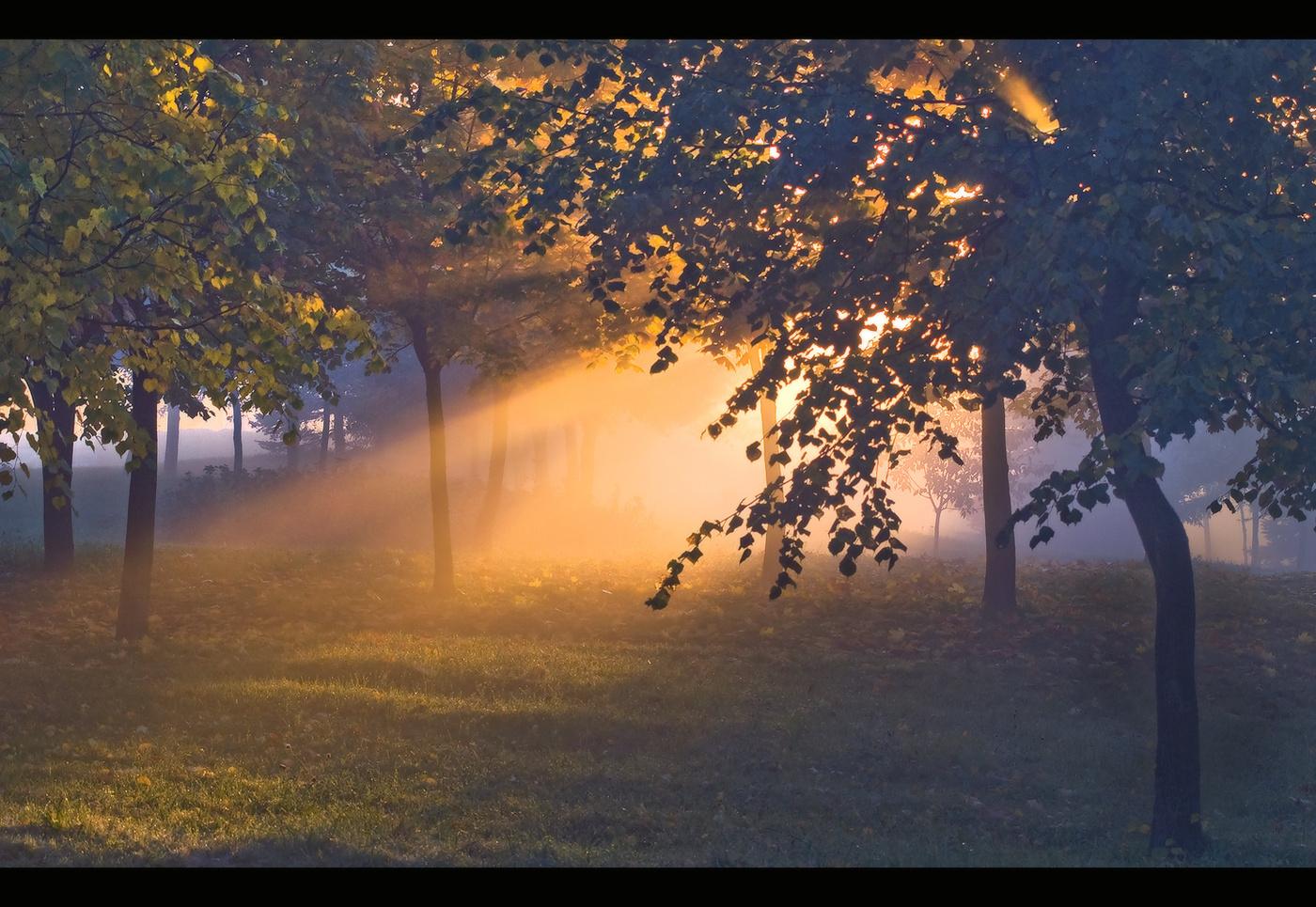 хорошем живом фото осеннего утра эффектно смотрятся