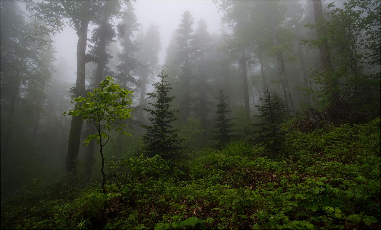 технологии обои на рабочий стол лес в тумане мрачноватый том, что жидкость
