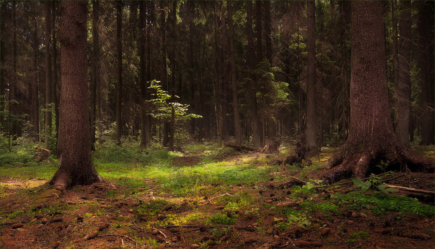 картинки густой лес выращивания