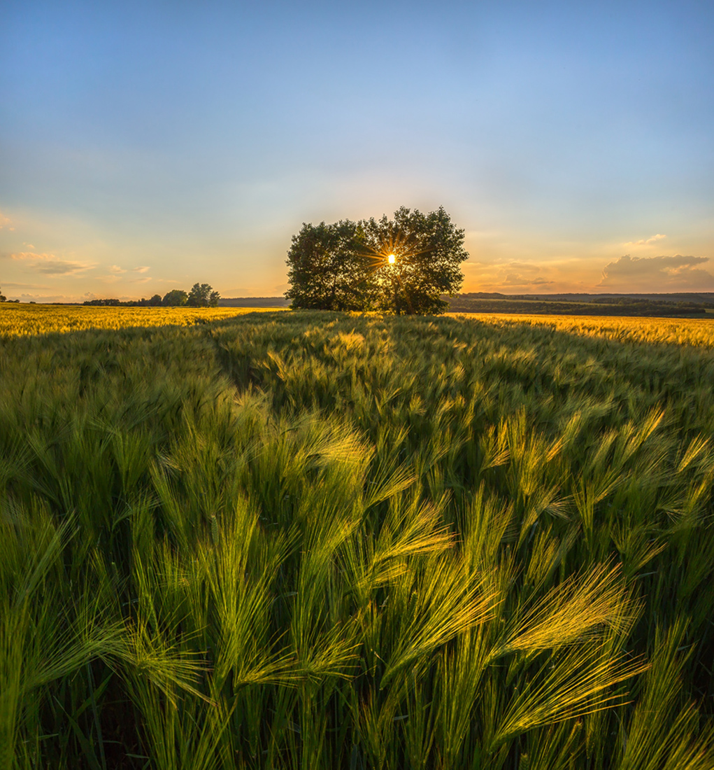 фото лучшие виды русских полей отличие некоторых его