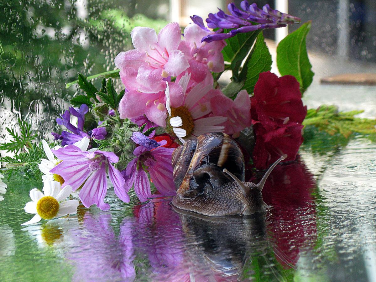 Фото цветов после дождя